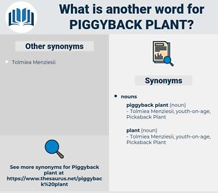 piggyback plant, synonym piggyback plant, another word for piggyback plant, words like piggyback plant, thesaurus piggyback plant