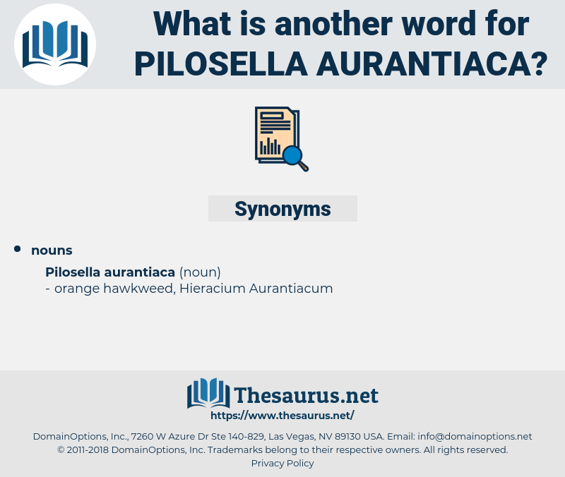 Pilosella Aurantiaca, synonym Pilosella Aurantiaca, another word for Pilosella Aurantiaca, words like Pilosella Aurantiaca, thesaurus Pilosella Aurantiaca