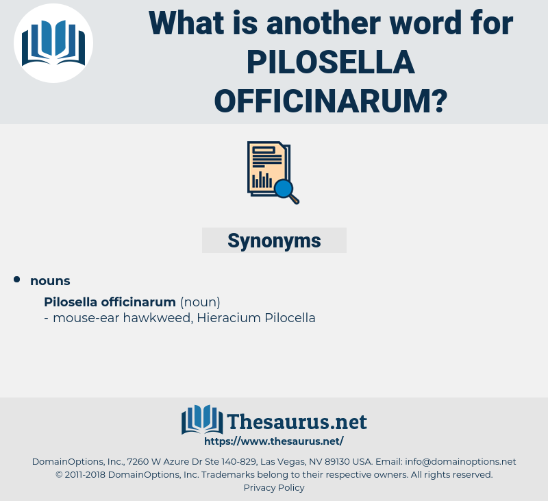 Pilosella Officinarum, synonym Pilosella Officinarum, another word for Pilosella Officinarum, words like Pilosella Officinarum, thesaurus Pilosella Officinarum