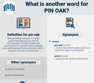 pin oak, synonym pin oak, another word for pin oak, words like pin oak, thesaurus pin oak