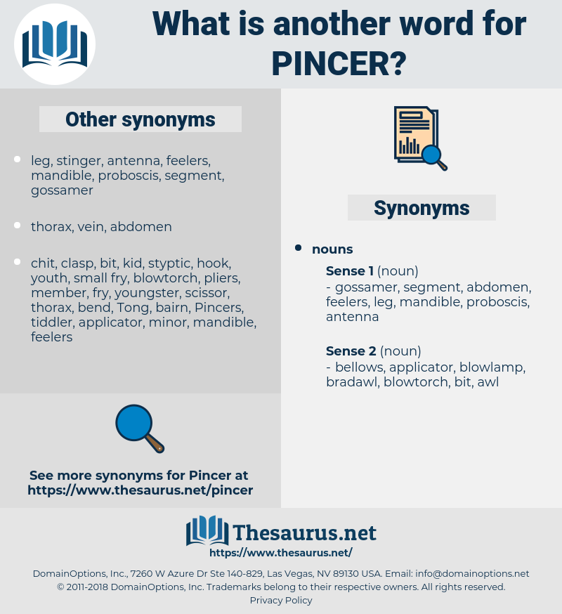 pincer, synonym pincer, another word for pincer, words like pincer, thesaurus pincer