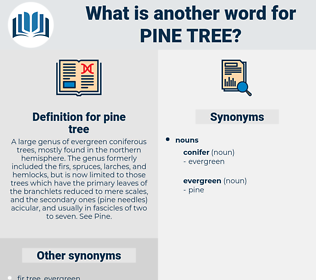 pine tree, synonym pine tree, another word for pine tree, words like pine tree, thesaurus pine tree