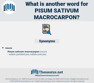 Pisum Sativum Macrocarpon, synonym Pisum Sativum Macrocarpon, another word for Pisum Sativum Macrocarpon, words like Pisum Sativum Macrocarpon, thesaurus Pisum Sativum Macrocarpon