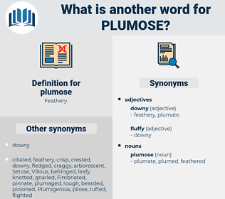 plumose, synonym plumose, another word for plumose, words like plumose, thesaurus plumose