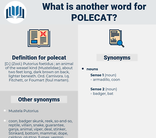 polecat, synonym polecat, another word for polecat, words like polecat, thesaurus polecat
