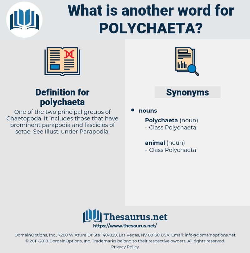 polychaeta, synonym polychaeta, another word for polychaeta, words like polychaeta, thesaurus polychaeta