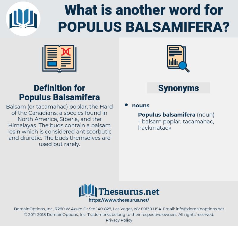 Populus Balsamifera, synonym Populus Balsamifera, another word for Populus Balsamifera, words like Populus Balsamifera, thesaurus Populus Balsamifera