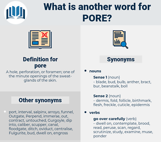pore, synonym pore, another word for pore, words like pore, thesaurus pore