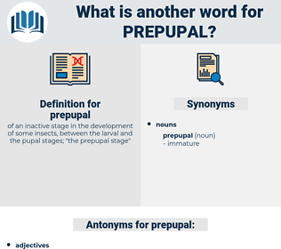 prepupal, synonym prepupal, another word for prepupal, words like prepupal, thesaurus prepupal
