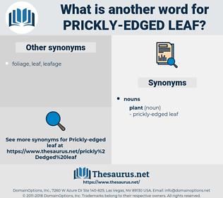 prickly-edged leaf, synonym prickly-edged leaf, another word for prickly-edged leaf, words like prickly-edged leaf, thesaurus prickly-edged leaf