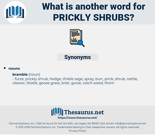 prickly shrubs, synonym prickly shrubs, another word for prickly shrubs, words like prickly shrubs, thesaurus prickly shrubs