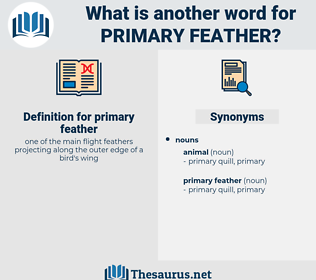 primary feather, synonym primary feather, another word for primary feather, words like primary feather, thesaurus primary feather