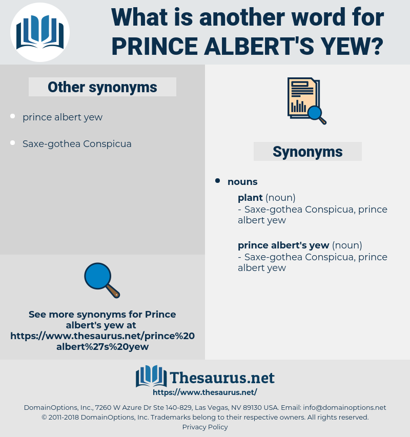 prince albert's yew, synonym prince albert's yew, another word for prince albert's yew, words like prince albert's yew, thesaurus prince albert's yew