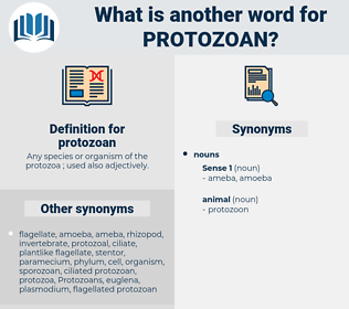 protozoan, synonym protozoan, another word for protozoan, words like protozoan, thesaurus protozoan