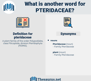 pteridaceae, synonym pteridaceae, another word for pteridaceae, words like pteridaceae, thesaurus pteridaceae