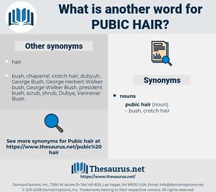 pubic hair, synonym pubic hair, another word for pubic hair, words like pubic hair, thesaurus pubic hair
