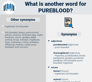 pureblood, synonym pureblood, another word for pureblood, words like pureblood, thesaurus pureblood