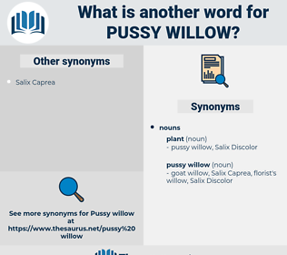 pussy willow, synonym pussy willow, another word for pussy willow, words like pussy willow, thesaurus pussy willow