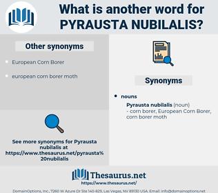Pyrausta Nubilalis, synonym Pyrausta Nubilalis, another word for Pyrausta Nubilalis, words like Pyrausta Nubilalis, thesaurus Pyrausta Nubilalis