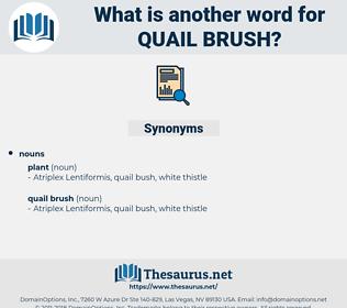 quail brush, synonym quail brush, another word for quail brush, words like quail brush, thesaurus quail brush