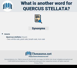 Quercus Stellata, synonym Quercus Stellata, another word for Quercus Stellata, words like Quercus Stellata, thesaurus Quercus Stellata