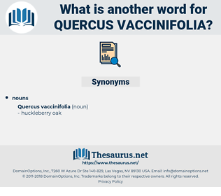 Quercus Vaccinifolia, synonym Quercus Vaccinifolia, another word for Quercus Vaccinifolia, words like Quercus Vaccinifolia, thesaurus Quercus Vaccinifolia