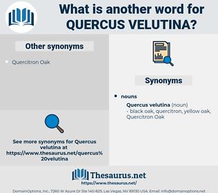 Quercus Velutina, synonym Quercus Velutina, another word for Quercus Velutina, words like Quercus Velutina, thesaurus Quercus Velutina