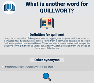 quillwort, synonym quillwort, another word for quillwort, words like quillwort, thesaurus quillwort