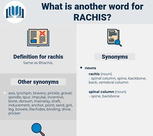 rachis, synonym rachis, another word for rachis, words like rachis, thesaurus rachis