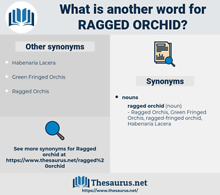 ragged orchid, synonym ragged orchid, another word for ragged orchid, words like ragged orchid, thesaurus ragged orchid