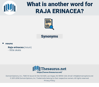 Raja Erinacea, synonym Raja Erinacea, another word for Raja Erinacea, words like Raja Erinacea, thesaurus Raja Erinacea
