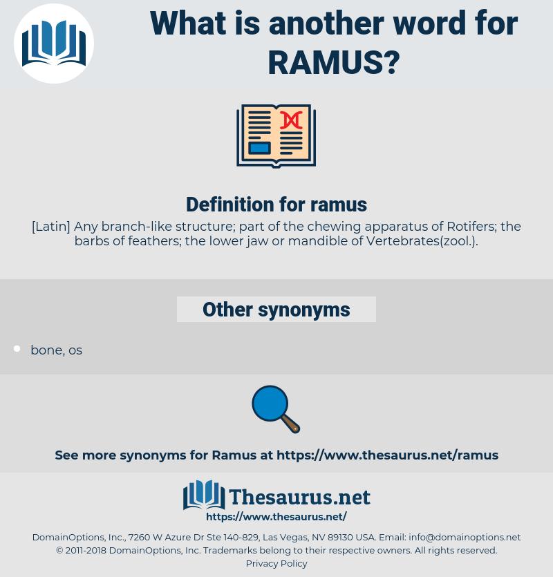 ramus, synonym ramus, another word for ramus, words like ramus, thesaurus ramus