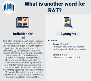 rat, synonym rat, another word for rat, words like rat, thesaurus rat