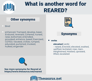 Reared, synonym Reared, another word for Reared, words like Reared, thesaurus Reared