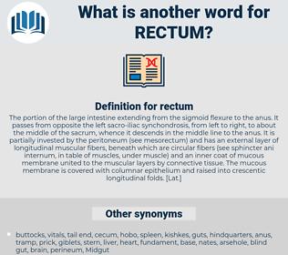 rectum, synonym rectum, another word for rectum, words like rectum, thesaurus rectum