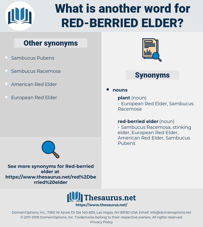 red-berried elder, synonym red-berried elder, another word for red-berried elder, words like red-berried elder, thesaurus red-berried elder