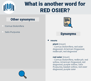 red osier, synonym red osier, another word for red osier, words like red osier, thesaurus red osier
