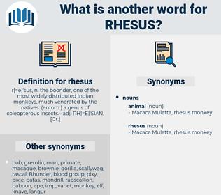 rhesus, synonym rhesus, another word for rhesus, words like rhesus, thesaurus rhesus