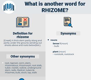 rhizome, synonym rhizome, another word for rhizome, words like rhizome, thesaurus rhizome