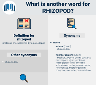 rhizopod, synonym rhizopod, another word for rhizopod, words like rhizopod, thesaurus rhizopod