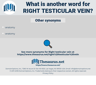 right testicular vein, synonym right testicular vein, another word for right testicular vein, words like right testicular vein, thesaurus right testicular vein