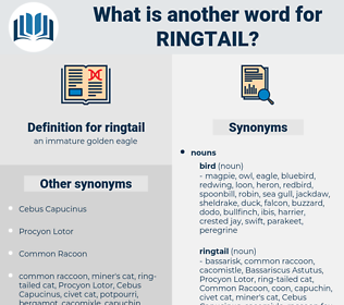 ringtail, synonym ringtail, another word for ringtail, words like ringtail, thesaurus ringtail