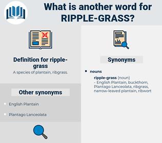ripple-grass, synonym ripple-grass, another word for ripple-grass, words like ripple-grass, thesaurus ripple-grass
