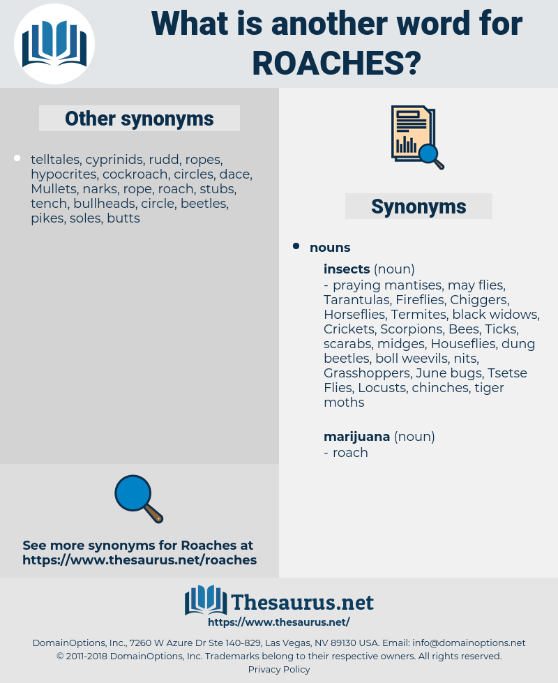 roaches, synonym roaches, another word for roaches, words like roaches, thesaurus roaches