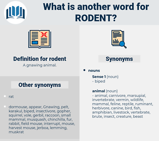 rodent, synonym rodent, another word for rodent, words like rodent, thesaurus rodent