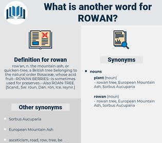 rowan, synonym rowan, another word for rowan, words like rowan, thesaurus rowan