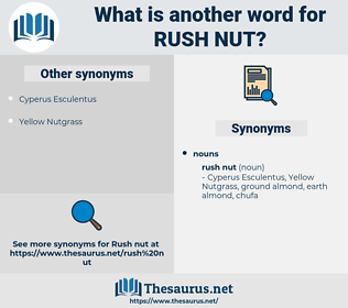 rush nut, synonym rush nut, another word for rush nut, words like rush nut, thesaurus rush nut