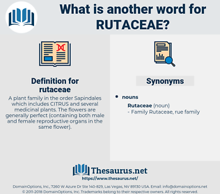 rutaceae, synonym rutaceae, another word for rutaceae, words like rutaceae, thesaurus rutaceae