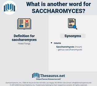 saccharomyces, synonym saccharomyces, another word for saccharomyces, words like saccharomyces, thesaurus saccharomyces