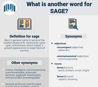 sage, synonym sage, another word for sage, words like sage, thesaurus sage